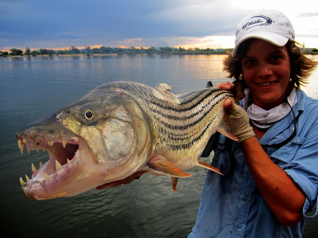 Tigers in the middle feathers fluoro for Tiger fish pictures