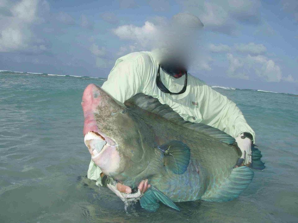 Bumphead_Parrotfish_on_fly-1