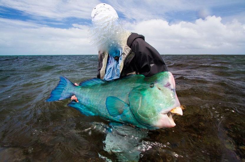 Bumphead_Parrotfish_on_fly-3