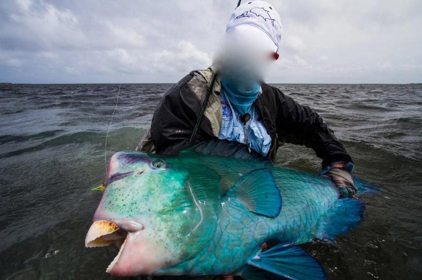 Bumphead_Parrotfish_on_fly-4