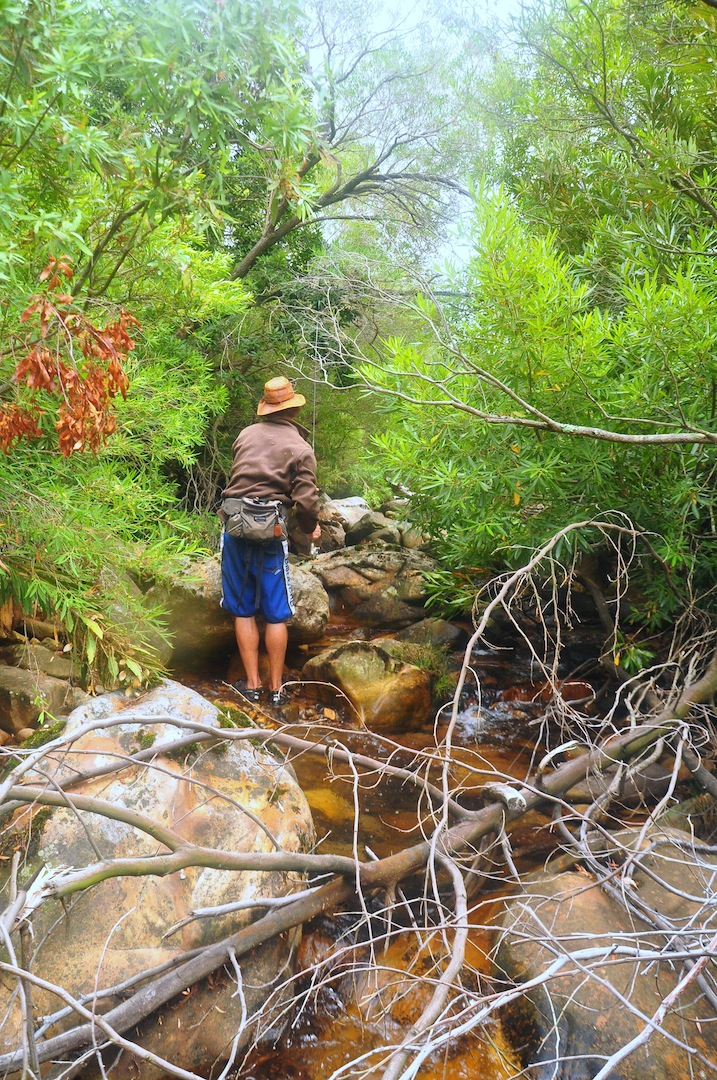Flyfishing_cape_streams-1
