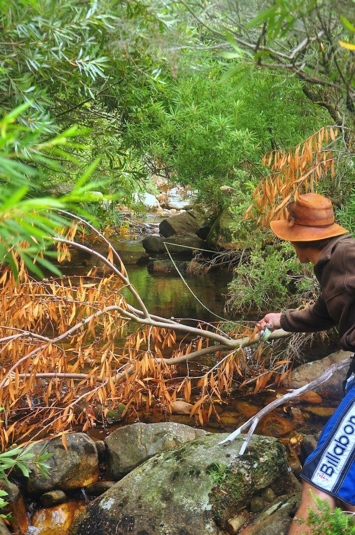 Flyfishing_cape_streams-4
