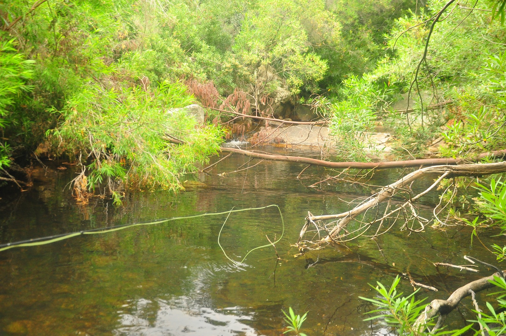 Flyfishing_cape_streams-5