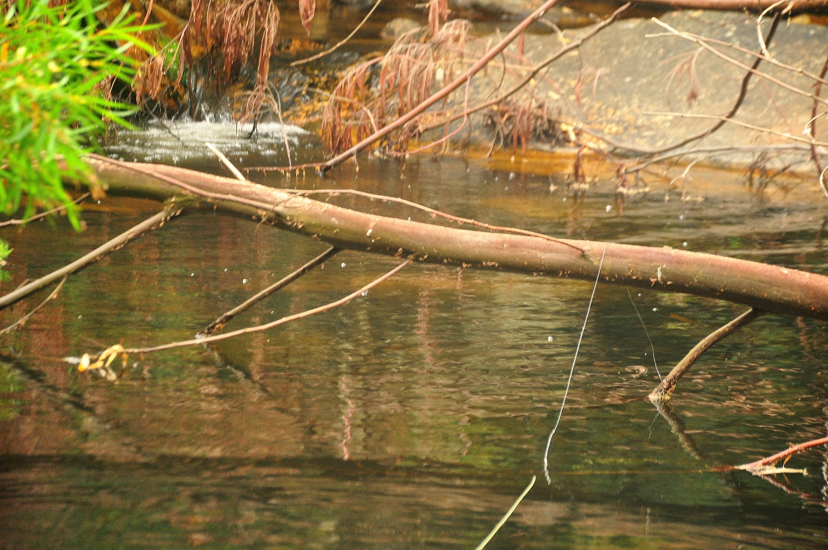 Flyfishing_cape_streams-7