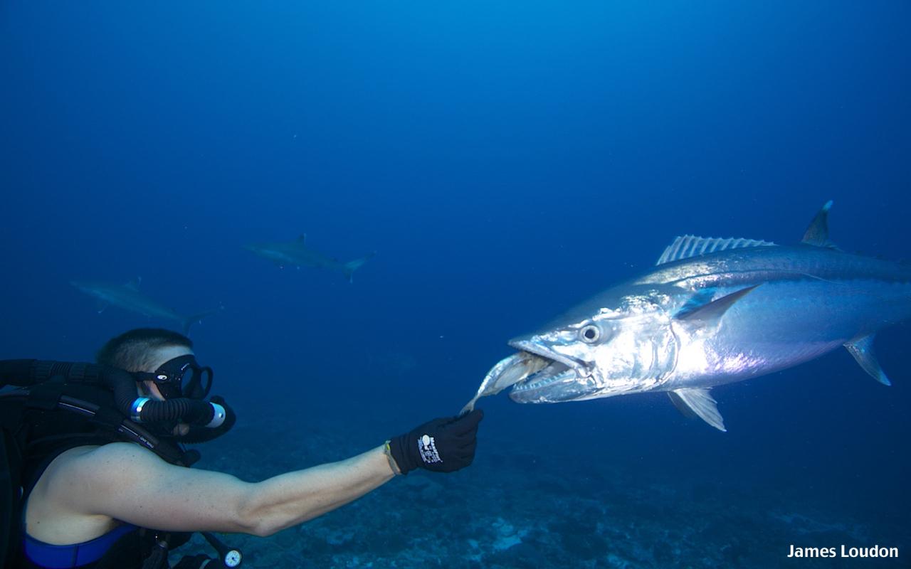 Flyfishing_Farquhar_Doggy_Eat_2