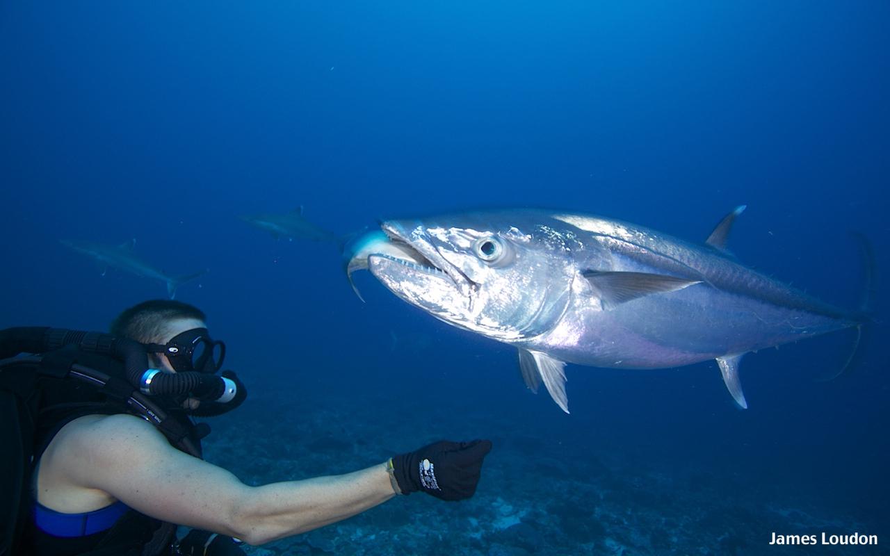 Flyfishing_Farquhar_Doggy_Eat_3