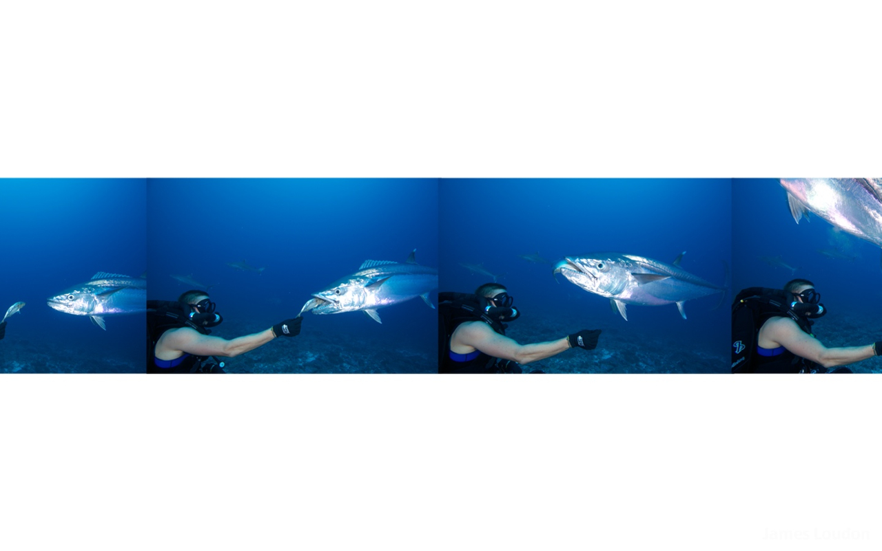 Flyfishing_Farquhar_Nick_Dog_Tooth_Tuna_feed