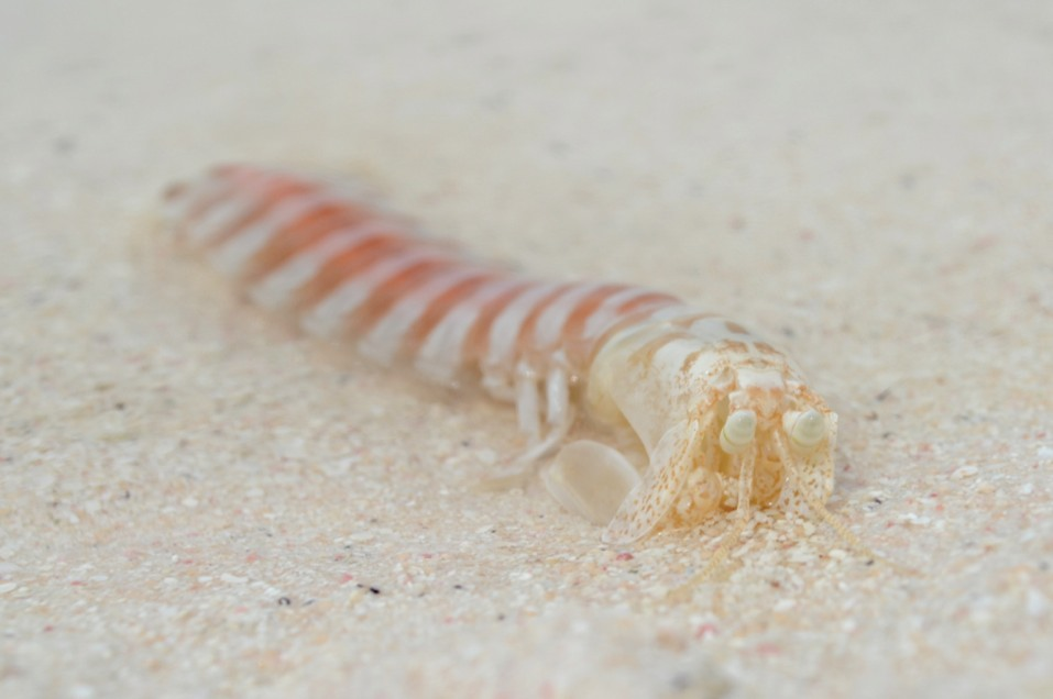 Typical Farquhar Mantis