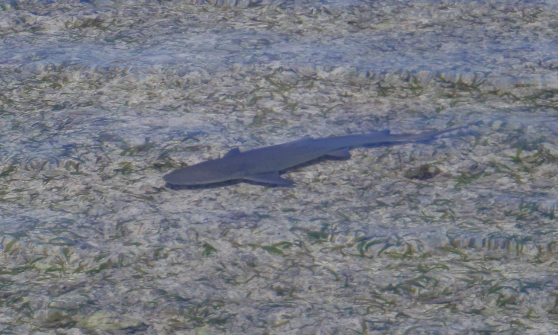 blemon_shark_seychelles
