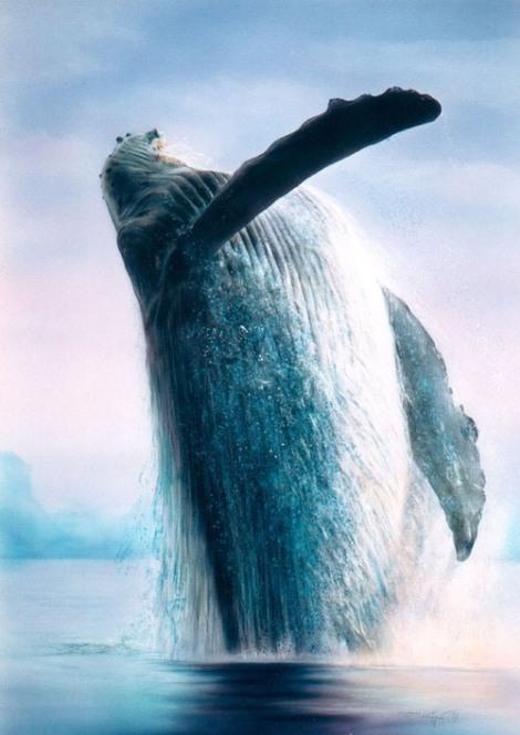 60-whale-33