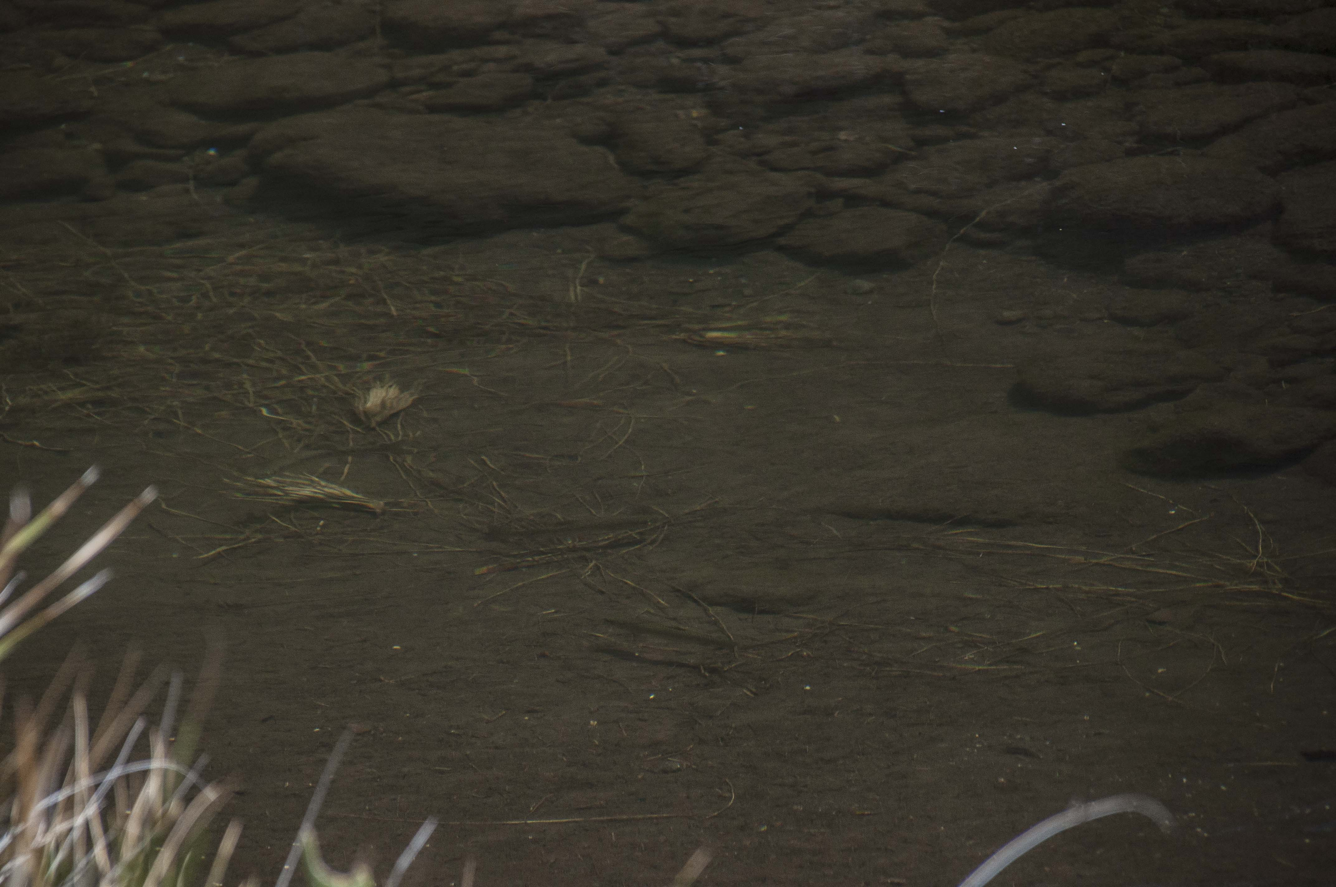 lesotho_fly_fishing_trout_hiking - 171