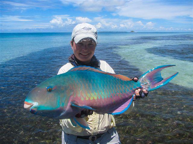 alphonse-island-seychelles-parrotfish