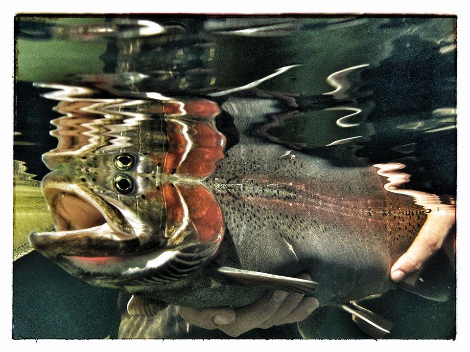 fly_fish_photos_photography_darryl_lampert-017