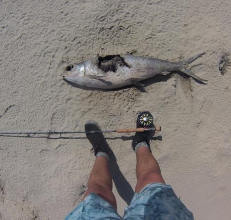 daed milkfish