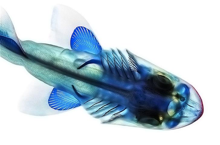 Adam-Summers-Fish-8