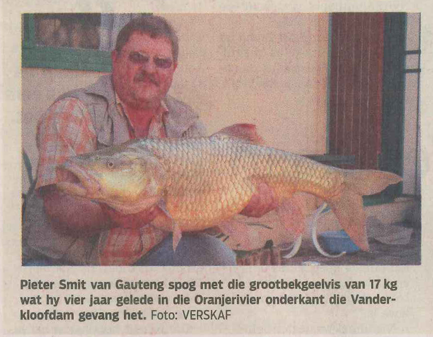 Recently caught 17 kg Largemouth Yellowfish on bait