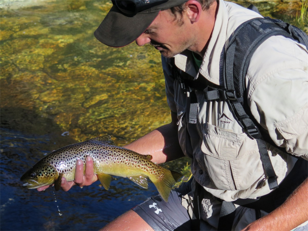 Rex reckoned its the best he has ever fished the river. Although on the full side, the browns were hungry and everywhere!