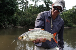 Brycinus sp. we used as live bait, the equivalent to tigerfish ice-cream