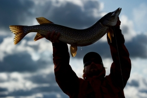 Celebrating Yukon pike