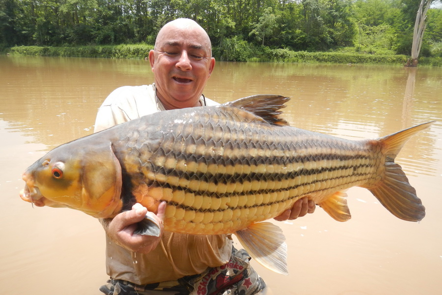 Jullien's Golden carp big fishes huge world record ever caught records largest IGFA gigante pesce biggest fish lake  ocean sea monster giant freshwater saltwater fisch images lb pound