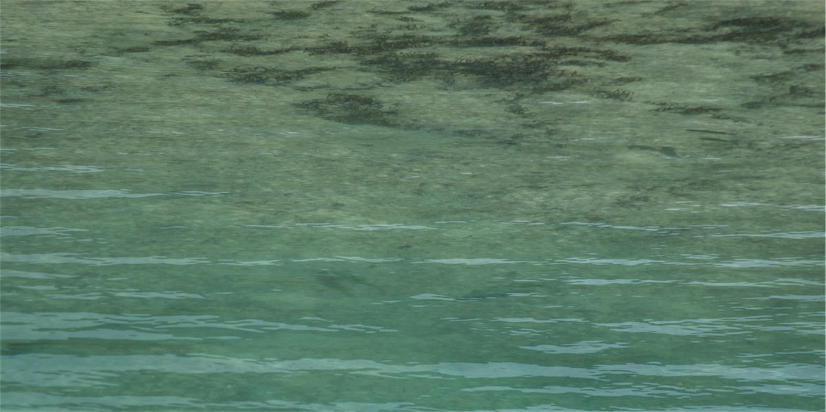 Two big bonefish feeding along the channel edge.