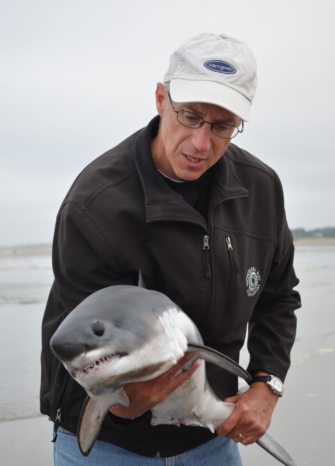 Seaside Beach salmon shark held 01