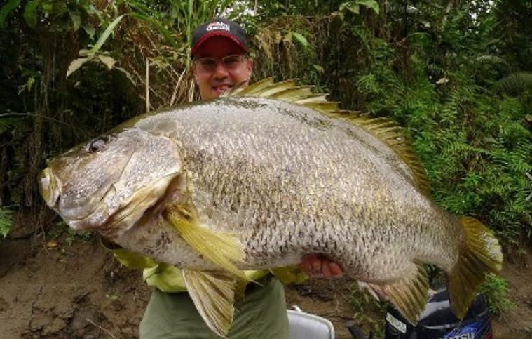 SNAPPER PAPUAN BLACK (Lutjanus goldiei australia papua guinea world record biggest fish in the world ever caught big huge fishes records largest IGFA monster fishing ocean sea giant size images lb pound pictures