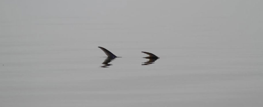 tailing-permit-shallow-water