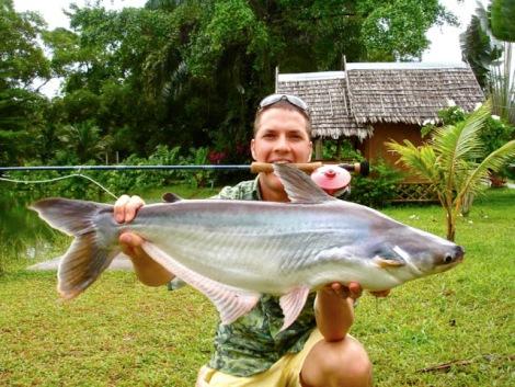 Sawai catfish on fly